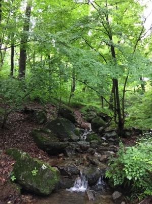 イングリッシュ・キャンプ開催地、栃木県 県民の森:今朝の様子